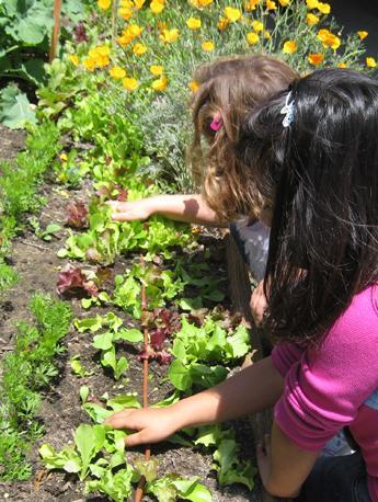 Students interacting with School Garden