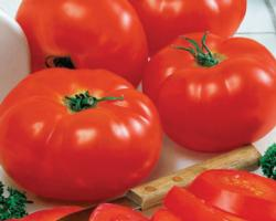 Big-Beef-Tomato