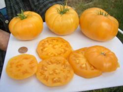 kelloggs_breakfast_tomatoes