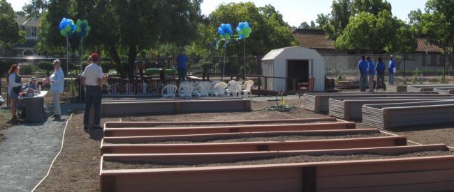 The Story of Los Medanos Community Garden