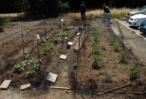 Our Garden-05