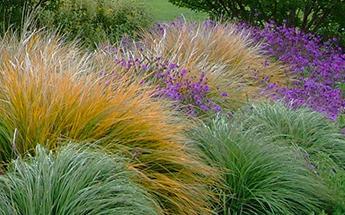 Grassy Landscape-DSCF1810-cr